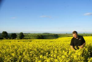 Yorkshire Rapeseed Oil Amongst UK's Best